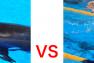 イルカと人間が泳いだら、どちらが速い?